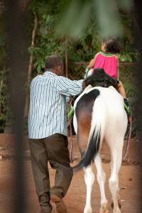 horse-390759_640