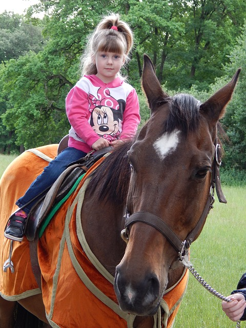 horse-817674_640
