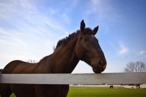 horse-at-fence-1344364